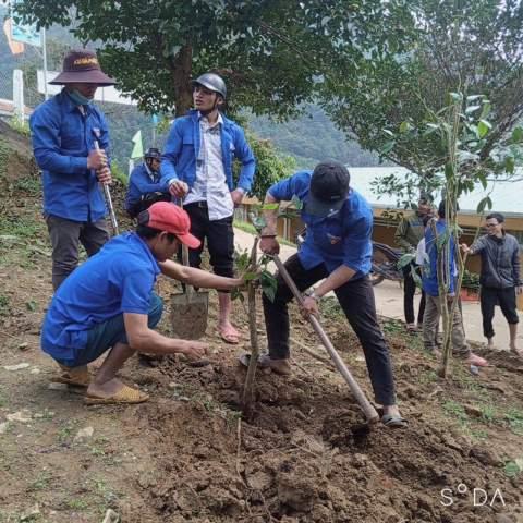 Ảnh: Đoàn viên thanh niên trồng chè xanh trong khuôn viên UBND xã Trà Vinh